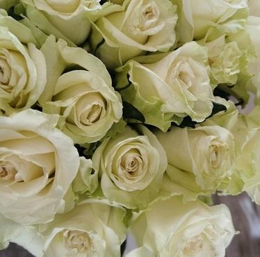 La Mont-Blanc - Rose blanche